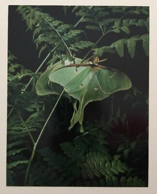Original Eliot Porter Photograph Green Moth Insect Nature Photography