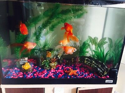 64 litre fish tank picclick uk. Black Bedroom Furniture Sets. Home Design Ideas