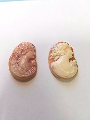 2 Two Cameo Shells 33mm x 23mm Fancy Lady Woman