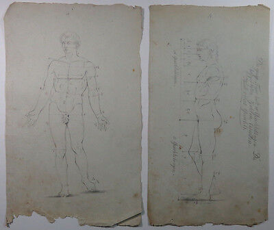2 Antique Proportion Study Drawings Graphite Laid Paper Watermarked German