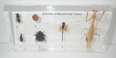 Six Kinds of Beneficial Insect Specimen Set in clear block Teaching Aid