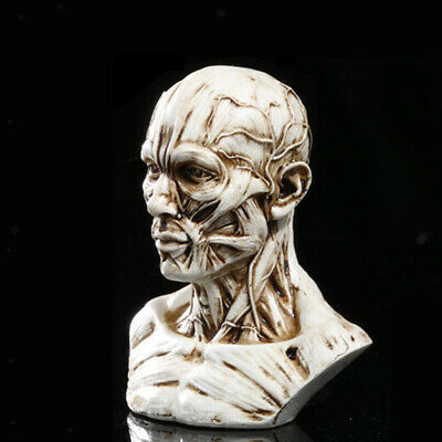 "4"" Human Anatomical Anatomy Skull Head Muscle Medical Model Antique White"