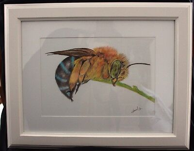 Blue Banded Bee in Frame ready to hang