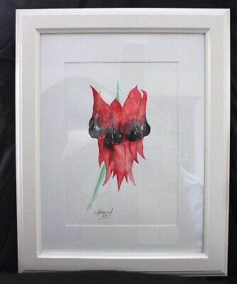 Sturt Pea in Frame ready to hang