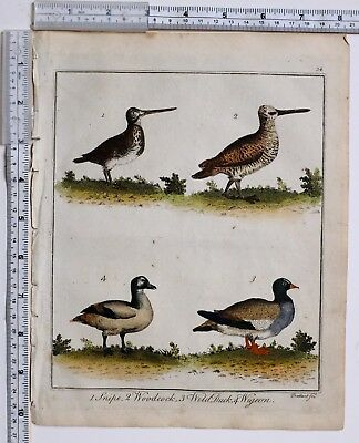 1779 Antique British Sportsman Print ~ Snipe Woodcock Wild Duck Wigeon