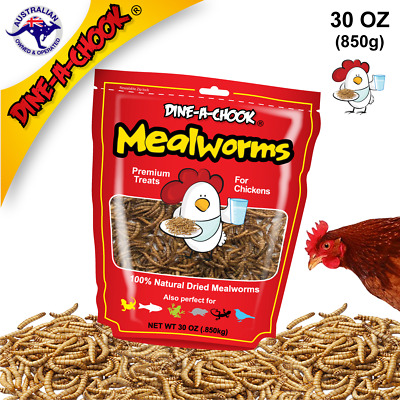 Dried Mealworms High Protein Treat | Wild Bird Chickens Poultry | Dine a Chook