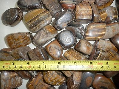 Tumbled Tiger's Eye Stone Ordinary Grade over 60 gram size 50 Pieces Lot