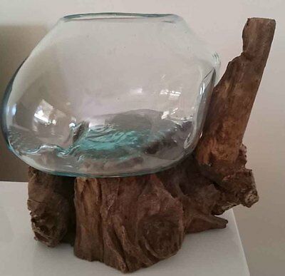 Glass Bowl Moulded on Tree / Vase/ Fish Bowl / Terrarium