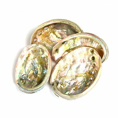 One 2-3 Inch Red Abalone Shell for Crafts or Incense Burner Smudge