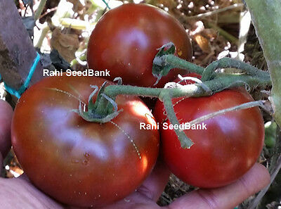 Chocolate Truss Tomato - One of the Most Tasty, Popular Tomato Variety -10 Seeds