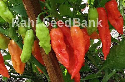 Bhut Jolokia/Ghost Chilli: 15 Seeds - One of the Hottest Chilli in the World!!!
