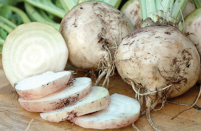 Beetroot - White Albino - An Unusual, Rare & Wonderful Variety for Home Grower!!