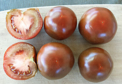 Black Russian Tomato - A Rich, Complex Flavoured Tomato Tasted to be Believed