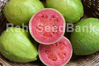 Guava Hawaiian Pink Supreme - A Guava with Robust Flavour & Taste!