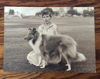 VINTAGE 1950's COLLIE DOG SHOW PHOTO