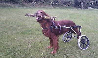 Wheels for Dogs, UK made.
