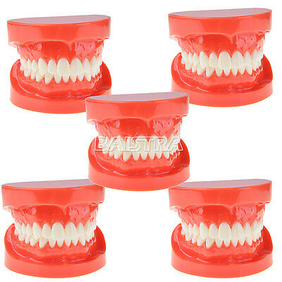 5 Pcs Dental Teach Study Adult Standard Typodont Demonstration Model Teeth