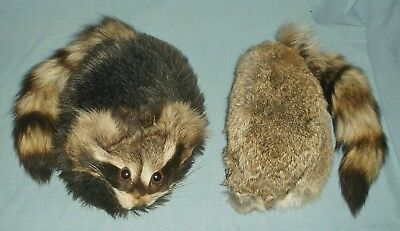 2 Coonskin Caps Real Fur Face Tails Mountain Man Rendezvous Costume