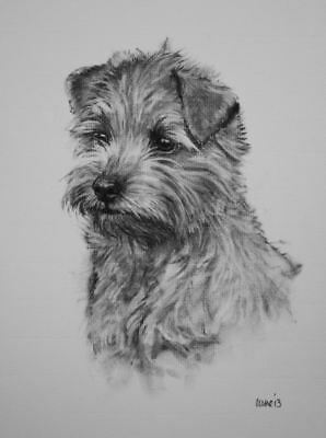 Norfolk Terrier dog art LE dog print wall art home decor dog gift by H Irvine