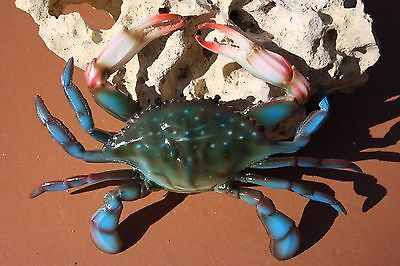 "(22) pcs, 6"",BLUE CRABS, SEAFOOD RESTAURANT DECORATIONS, REALISTIC BLUE CRAB"