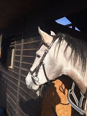 Micklem Style Competition Bridle