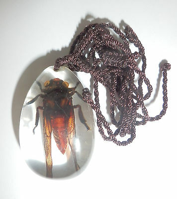Insect  Necklace Red Cicada Huechys sanguine Specimen SD07 Clear