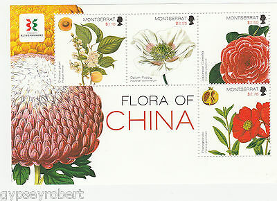 MONTSERRAT   Flora of China