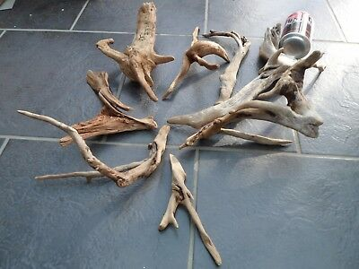 driftwood pieces 8 delicate spiky shapes of bogwood, for crafting , floristry or