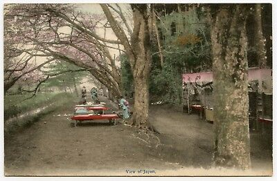 Street Scene Early 1900's Beautiful Tinted Blossoms, Ladies, Kimono