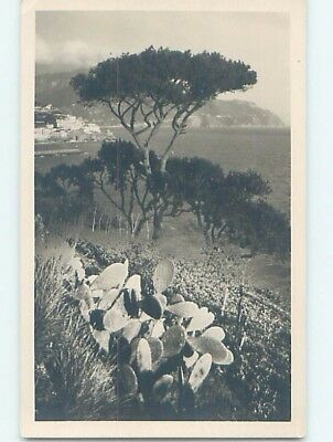 old rppc CACTUS BY THE SHORELINE Amalfi Italy HM1507