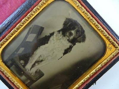 Antique Daguerreotype Union Case Photograph Leather Dog Labrador Glass Vintage