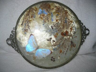 M. W. Carr Vintage Iridescent Inlaid Butterfly Wing Art Silver Plated Glass Tray