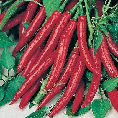 Chilli Seed Cayenne 30 Seeds Heirloom