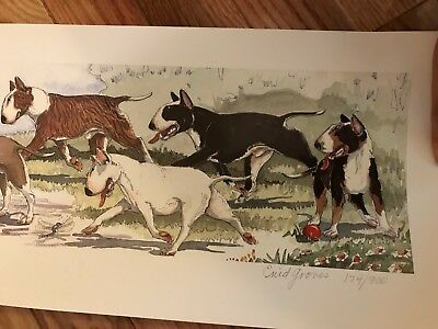 Lovely Bull Terrier Print Signed/Numbered