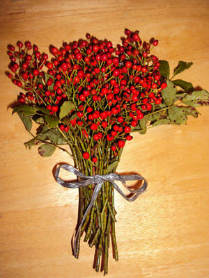 "Freshly Cut Bunch 20 stems Primitive Maine Wild Rosehips 8""-12"" Rose Hips"