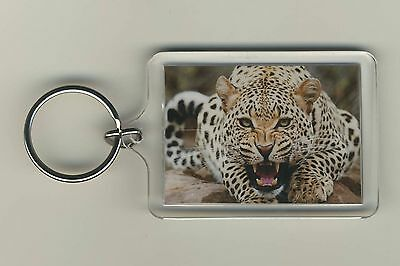 Leopard Big Cat Nature Wild Animal Wildlife Acrylic Photo Keychain Key Fob