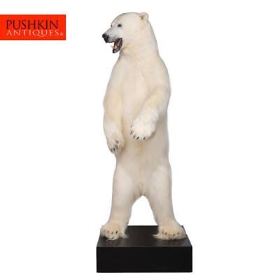 EXCEPTIONAL TAXIDERMY FULL SIZE STANDING POLAR BEAR 240cm TALL