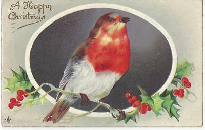 Christmas - Beautiful Robin Bird,  Very Red Breast Embossed Holly 1913 Postcard