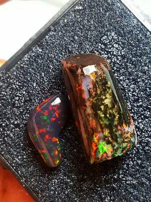 12.20ct pair rough opalized wood & solid black opal