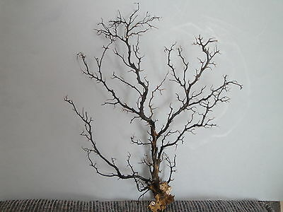 "14""x 17.6"" Large Black Gargonia Sea Fan Fish Tank Seashells Reef Coral"