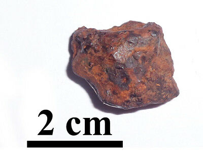 NEW !!! Twannberg Iron IIG meteorite, excellent nice fragment, 17.9 grams