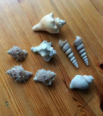 Collection of 8 Sea shells of Various types