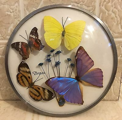 """Vintage Real Butterfly Wall Hanging 7"""" dia. Glass Bubble Brazil Mid Century"""