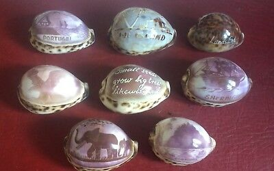 Collection of 8 carved sea shells