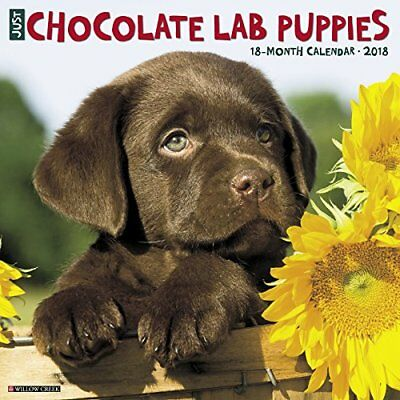 Just Chocolate Lab Puppies 2018 Wall Calendar (Dog Breed Calendar), New