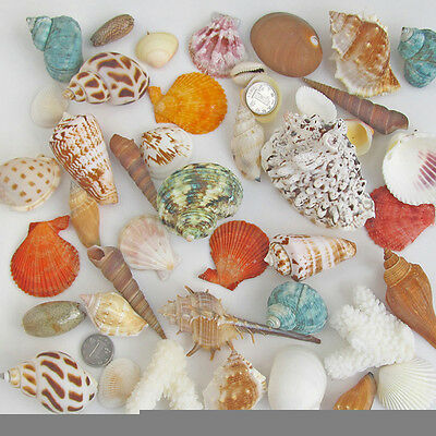 Approx 150g Mixed Beach SeaShells Sea Shells Shell Craft Table Decor Aquarium.PR
