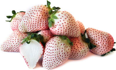 White soul strawberry 'Pineberry'- pineapple tasting- 20  seeds