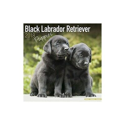 Calendrier Noir Labrador Retriever Puppies 2018