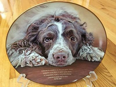 RARE Danbury Mint SOMEONE TO COMFORT Springer Spaniel Ltd Ed Plate