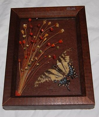 Vintage Real Mount Butterfly Framed Blue Dry Flowers Floral Brazil Yellow Brown